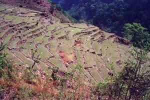 pola tarasowe przy szlaku do Sanktuarium Annapurny