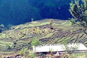 tradycyjne pola uprawne w Himalajach            al