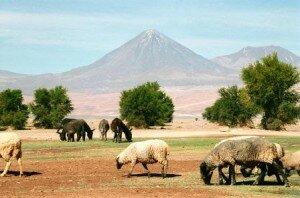 jeden z wulkanów na Pustyni Atacama