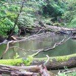 piękno dzikiej rzeki